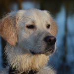 dog-1551709_1280