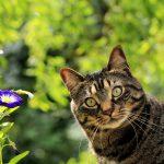cat-1706757_1280