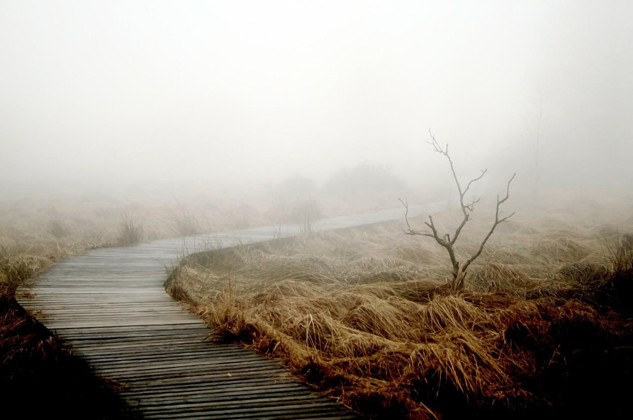 fog-258232_1280